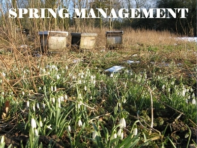 Spring Management Powerpoint
