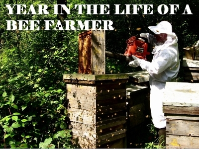 Year in the life of a bee farmer Powerpoint